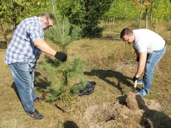 Озеленение Иваново –  глупость чиновников или гениальный ход