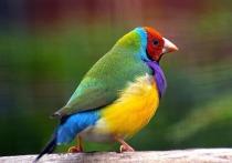 Столичные орнитологи спасли птицу, которая наглоталась елочных игрушек